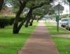 Calçada verde embeleza ruas e reduz enchente