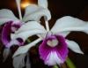 Orquídeas encantam em suas formas e cores