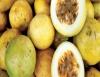 Maracujá é fruta que produz o terceiro suco mais consumido no Brasil