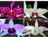 Flores do verão deixam a estação mais colorida