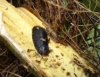 Pragas e doenças no coqueiro têm particularidades para o controle