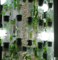 Na horta vertical é possível plantar manjericão, coentro, camomila, alface, hortelã, mostarda, tomilho e tomate.