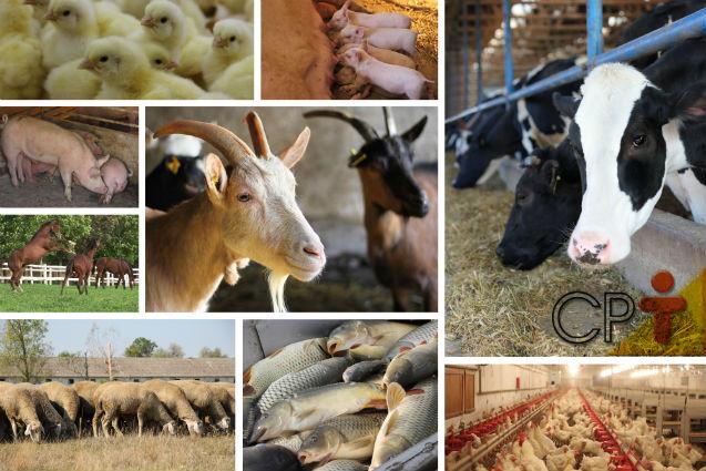FAO diz que o setor agropecuário brasileiro terá o maior crescimento do mundo   Notícias Cursos CPT