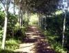 Arborização e cafeicultura, a união que faz a força