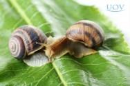 Criação de escargots: dicas de temperatura e ventilação