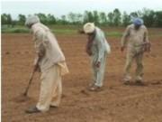 Produtores Rurais desenvolvem técnicas agrícolas sustentáveis
