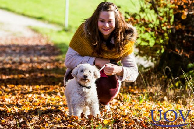 Se você adotou um cão, cuide bem dele!   Artigos Cursos UOV