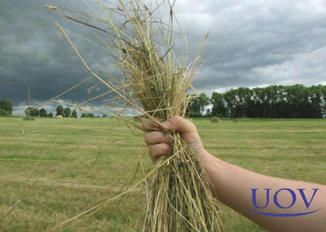 Pastagens e campos de feno: principais sistemas de irrigação   Artigos Cursos UOV