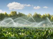 Por que implantar um sistema de irrigação em lavouras?
