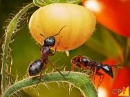 O controle biológico e a redução de custos da lavoura