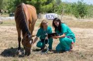 Tire sua dúvida: como corrigir cascos defeituosos de cavalos?