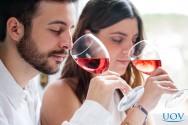 Devo escolher cursos presenciais ou online para aprender sobre vinhos?