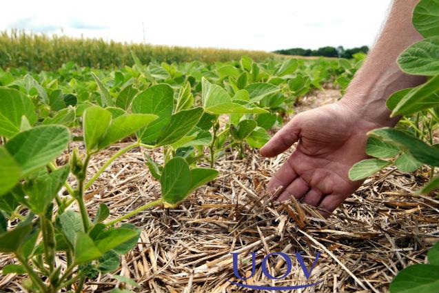Vai produzir alimentos orgânicos? Antes, construa a biodiversidade local!   Artigos Cursos UOV