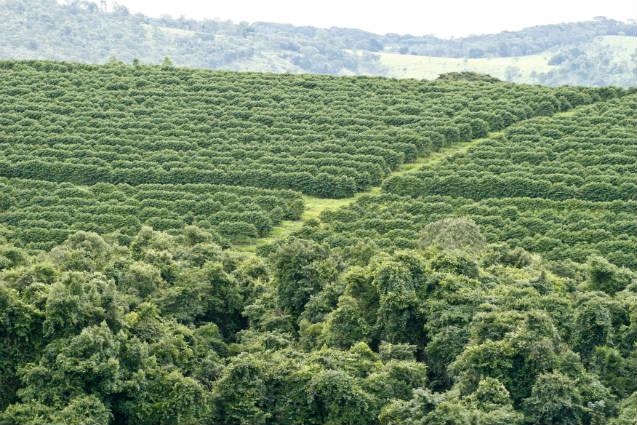 Casal torna sítio produtor de café lucrativo