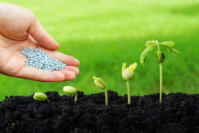 Biomassa de leguminosas vira fertilizante orgânico