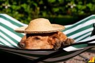 Monte seu hotel para cães e gatos