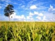 Secretário da agricultura pretende aumentar os números da produção agrícola no país
