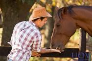 Especialista: comprar cavalo é tarefa NADA FÁCIL!