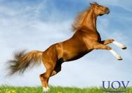 Por que os cavalos nos fascinam? Por vários motivos. Conheça-os!