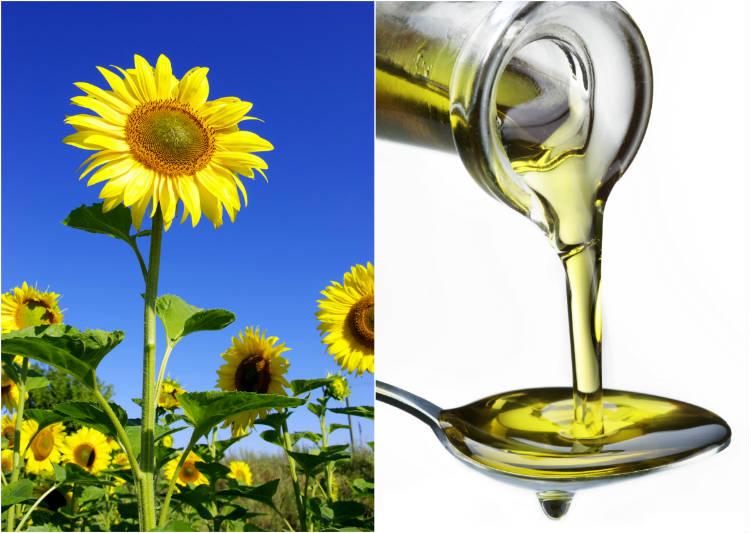 Dicas para montar fábrica de óleo vegetal