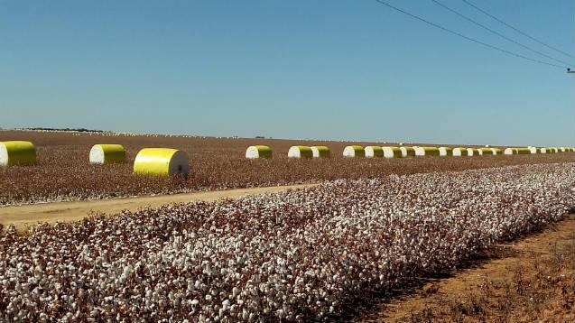 Colheitadeira de algodão de 1 linha aumenta produtividade