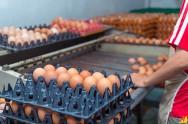 Melhore a produção de suas galinhas!