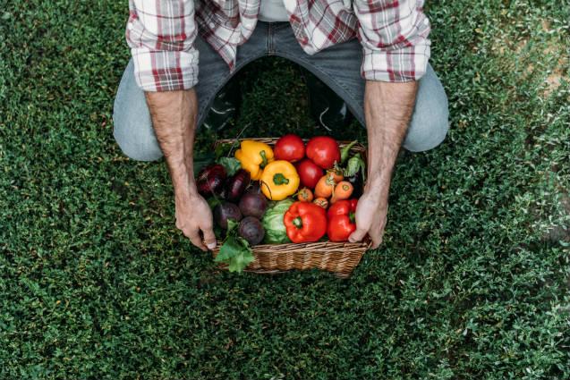 Grandes produtores têm aderido à agricultura sintrópica