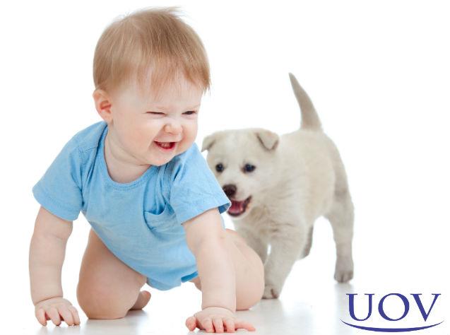 A primeira fase de vida dos cães    Artigos Cursos UOV