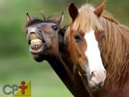 A pelagem dita o temperamento do cavalo. Verdade ou mentira?