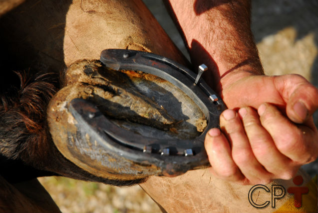Tire sua dúvida: quando trocar as ferraduras dos cavalos?   Artigos Cursos CPT