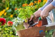 Saiba mais sobre implantação de jardins e áreas verdes
