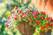 Conheça alguns tipos de jardins verticais
