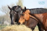 Saiba mais sobre manejo alimentar de cavalos