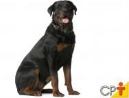 Como ensinar o cão o comando de sentar?