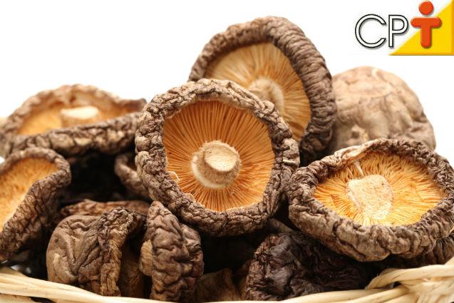Pragas e doenças em cogumelos comestíveis? Isso é possível?   Artigos Cursos CPT