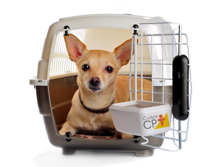 Dicas para montar hotel para cachorro em petshop   CPT