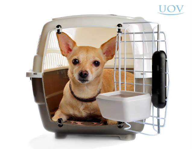 Dicas para montar hotel para cachorro em seu petshop