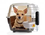 Dicas para montar hotel para cachorro em petshop
