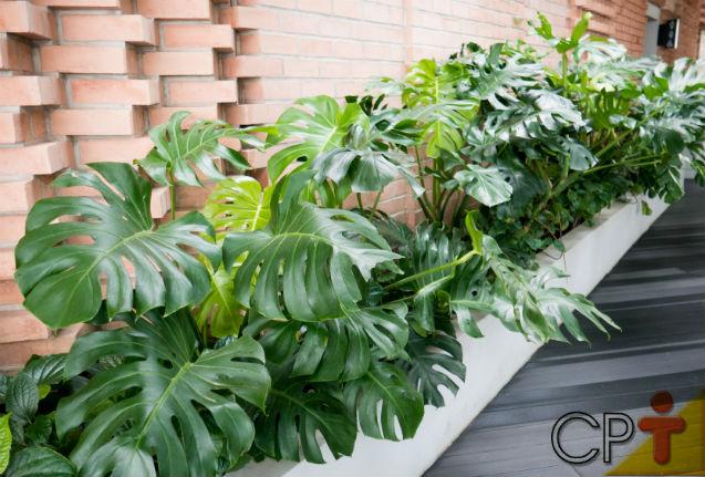 É amante da medicina natural? Conheça o Floral da Amazônia Cipó-imbé   Dicas Cursos CPT