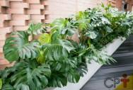 É amante da medicina natural? Conheça o Floral da Amazônia Cipó-imbé
