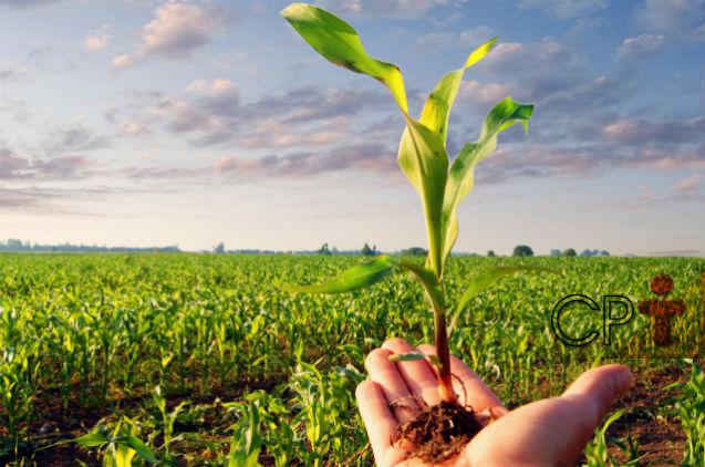 Milho hidropônico: segundo alimento animal mais rico em proteína   Artigos Cursos CPT