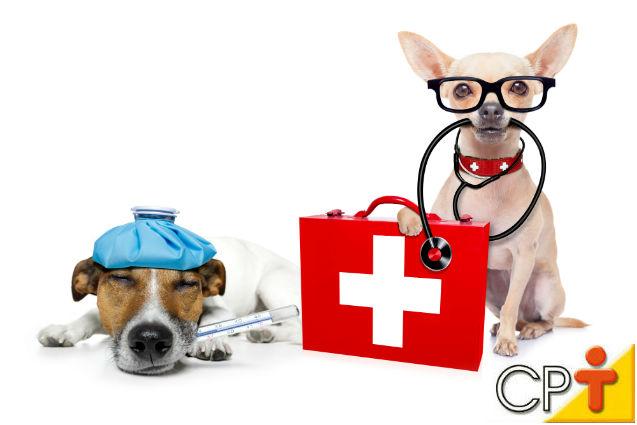 Donos de animais têm de ter noções de primeiros socorros, SIM!   Artigos Cursos CPT