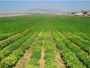 Crédito Agrícola beneficia produtor rural