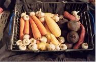 https://cptstatic.s3.amazonaws.com/imagens/enviadas/materias/materia2062/m-cultivo-organico-hortaliças-raiz.jpg