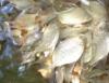 Tipos de peixes variam de acordo com o clima