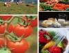 Exportações do agronegócio brasileiro devem crescer 10% em 2011