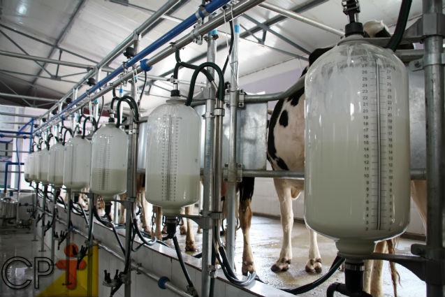 Resfriamento de leite na fazenda e coleta a granel   Cursos CPT