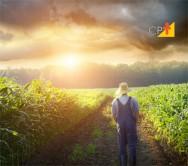Xeque-Mate: em jogo os mistérios da produtividade do solo