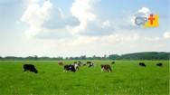 Pastagem ecológica