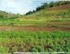 Rotação de culturas evita deslizamentos de terra
